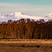 Stuc a Chroin and Ben Vorlich looking north across the Carse