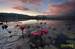 CNY 2016 Dawn at Lake Seloton (lantaw.com) Tags: mountain sunrise dawn chinesenewyear 2016 lakesebu lotusflowers southcotabato soccsksargen lakeseloton