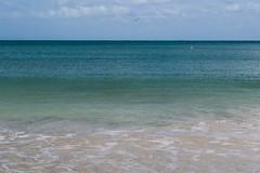 El color del mar (Raíces anónimas) Tags: costa arbol atardecer mar colombia pescador caribe pescar pelícano islafuerte arbolquecamina