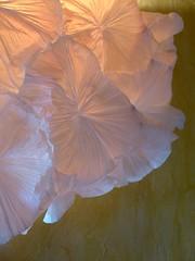 Ipome en robe de lune (l'attribut-lumire) Tags: light texture lumire papier dco luminaire cration ipome lumineuse