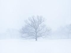 16022-04B-0386_V2 (Jon Shireman) Tags: nyc newyorkcity snow newyork unitedstates centralpark location sheepmeadow geolocation centralparknyc geo:city=newyork geo:state=newyork geo:country=unitedstates camera:make=canon exif:make=canon exif:focallength=40mm exif:aperture=56 exif:model=canoneos5dmarkiii camera:model=canoneos5dmarkiii exif:lens=ef40mmf28stm exif:isospeed=400