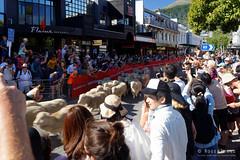 20160206-05-Running of the Wools crowd (Roger T Wong) Tags: city travel newzealand summer people sheep crowd merino nz southisland otago queenstown 2016 sony2470 rogertwong sel2470z sonyfe2470mmf4zaosscarlzeissvariotessart sonya7ii sonyilce7m2 sonyalpha7ii runningofthewools