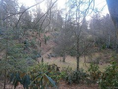 My Birnam Garden (11) (StevanHogg05) Tags: scotland dunkeld birnam