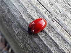 Avance de primavera (desdetusojos) Tags: life naturaleza primavera spring rojo colores xoania