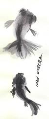 pez en tinta china (ivanutrera) Tags: fish pez animal painting sketch peces paintbrush paintwork tintachina brushwork