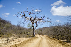 Os caminhos do Serto (charlimbraw) Tags: brasil nordeste rn riograndedonorte serto caatinga thegalaxy serid cidadesnordestinas spiritofphotography nikonflickraward infinitexposure