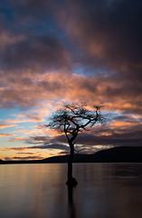 On the bonny, bonny banks of Loch Lomond... (Borderli) Tags: sunset tree scotland lochlomond millarochybay