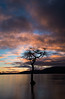 On the bonny, bonny banks of Loch Lomond... (Borderli) Tags: sunset tree scotland lochlomond millarochybay