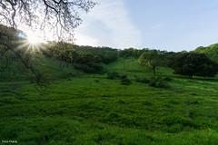 Greenery (Tracysniche) Tags: california park sunset green landscape spring shoreline hills greenery wildflowers norcal hillside martinez regional strait carquinez