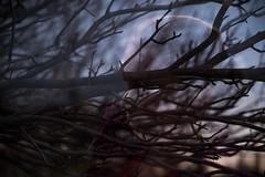 Julia Double Exposure (Hummingdust) Tags: light sunset tree nature girl silhouette outside outdoors utah nikon exposure branch moody child outdoor double multiple 365 melancholy tamron f28 ogden childphotography rimlight 2470 365days utahphotographer nikondf