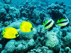 IMG_0234 (eye[4]eye) Tags: egypt diving gypten tauchen bluewaves