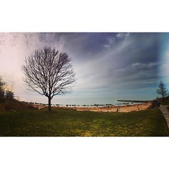 The tree, again. (imagesafari) Tags: fisheye rockyriver project365 thattree rrpark instagram