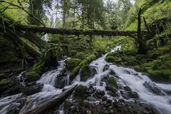 Fairy Falls Trail (Justin Knott) Tags: dog nikon logs falls fairy 24mm d800 rokinon