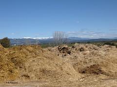 Las Rozas de Madrid. Tambien es una ciudad rural. Also is a rural town. (Esetoscano) Tags: españa primavera rural landscape spring spain straw paisaje paja comunidaddemadrid lasrozasdemadrid