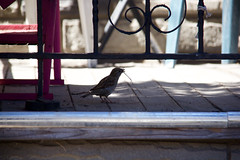 nesting bird (theharv58) Tags: lightandshadows doors photographers painters catwalk graffitiart canon60d artinvariousforms canoneos60d canonefs18200mmislens bonsaiart canonefs18200mm13556islens topwpkdl topwpkdltorontophotowalkparkdale