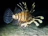 IMG_0528 (eye[4]eye) Tags: egypt diving ägypten tauchen bluewaves