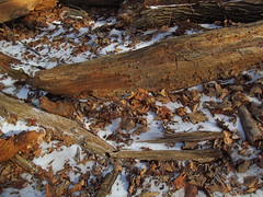Kensington 76 January 7 2015 (lillith_complex) Tags: deadleaves deadtree deadwood