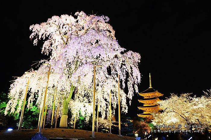 2014東寺夜櫻 (9).jpg