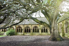 New College Cloisters (-justk-) Tags: tree unitedkingdom oxford cloisters newcollege newcollegecloisters