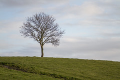 Lonely tree (dareangel_2000) Tags: tree field landscape march countryside spring country northernireland 2016 codown dariacasement strangfordrun