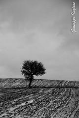 ricordando l'inverno (Giuseppe Inglese) Tags: winter tree albero inverno efs1785mmf456isusm suditalia bisaccia irpinia provinciadiavellino canoneos70d giuseppeinglese