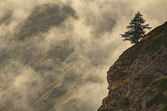 Zen (Valpelline Valle D'Aosta, Italy) (AndreaPucci) Tags: italy tree fog freedom holidays zen valledaosta valpelline canoneos60 andreapucci