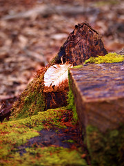 (ShelleyCorinne) Tags: trees colour leaves forest moss spring olympus bark olympuspen blackwoodforest micro43 olympusepl1