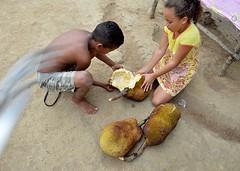 Parque Memorial Quilombo dos Palmares-Alagoas. (nariobarbosa) Tags: brasil brazilian zumbi jaca alagoas fruto porai parquememorialquilombodospalmares