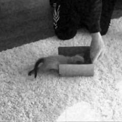Speedy Diego  (sole) Tags: pet cats pets cute animal chats furry katten kat feline chat adorable fluffy diego kittens gato katze katzen catinbox miyu kittycat catsinboxes fluffycat sole carmengonzalez