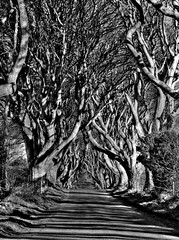 dark hedges (seanfderry-studenna) Tags: road county ireland sunset irish mist plant tree nature forest sunrise dark landscape alley outdoor branches tourist northern beech hedges antrim armoy dramatictonemapped
