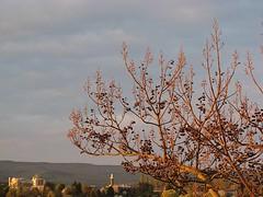 Herr Gott, ich ruf zu dir (amras_de) Tags: tree tr boom arbor rbol albero tre puu arbre rvore strom baum bam arbo fa trd tr koks drvo drzewo paulowniatomentosa kejsartrd medis arbore aga stablo zuhaitz crann drevo kejsertr blauglockenbaum rvulu paulowniaomszona paulnia paulovnieplstnat cinapaulovnio keisaripuu