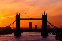 The Icon of London (Zoltan Gabor) Tags: city uk bridge urban sun sunlight bird london tower thames sunrise river landscape dawn fly colorful cityscape famous
