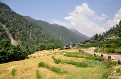 Barot,Himachal Pradesh. (mala singh) Tags: india mountains nature village agriculture himalayas himachalpradesh barot