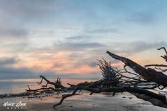 Big Talbot Island (Nine One Media) Tags: park beach sunrise canon island big long exposure state driftwood talbot ameliaisland 80d nineonemedia