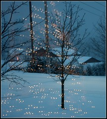 Reflection (~ Nanette ~) Tags: trees winter snow lights reflction christmas2015