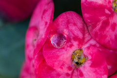 jorgecanelon-9877 (jorgenolenac) Tags: waterdrop morningdew