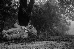 . (ioannabo) Tags: bear trees blackandwhite bw photography photo nikon teddy creepy greece blackwork sanatorio nikond3200 parnitha