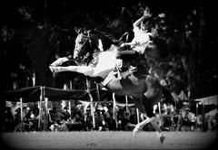 El tobiano reservado (Eduardo Amorim) Tags: horses horse southamerica argentina criollo caballo cheval caballos cavalos pferde cavalli cavallo cavalo gauchos pferd ayacucho chevaux gaucho amricadosul gacho amriquedusud provinciadebuenosaires  gachos  sudamrica suramrica amricadelsur sdamerika crioulo caballoscriollos criollos jineteada  buenosairesprovince americadelsud gineteada crioulos cavalocrioulo americameridionale caballocriollo eduardoamorim cavaloscrioulos cavall