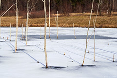 Sticks and Shadows (OH_Snapper) Tags: park trees winter ohio sun snow cold nature water sunshine pen outdoors frozen pond shadows hiking walk trails freezing olympus hike trail freeze oh chilly marsh olympuspen barren lakecounty willoughby kirtland penitentiaryglen lakecountyohio epl6 penepl6