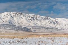 Beautiful skies, Pronghorn, and Bison (kellykhorne) Tags: antelopeisland bison garrranch