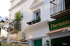 Kitty (Kym.) Tags: cat walking spain walk kitty andalusia nerja andalucia otherpeoplesgang