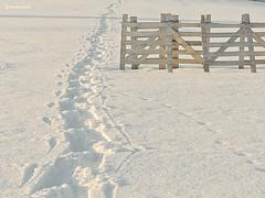Schnee Walking (GerWi) Tags: schnee winter sky white snow field sport outdoor feel january feld felder spuren himmel hike fields wandern wetter januar nordicwalking weis schneeflocken reuth schneedecke schneefangzaun