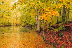 _MG_1549 (RKAMARI) Tags: park autumn trees lake nature beautiful forest events cities national bolu gezi yedigöller