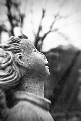 Forgotten III (Eric Baggett) Tags: tree film monochrome angel analog religious gloomy decay fineart gothic creepy grainy damaged statuary lowkey somber distressed bnw decaying filmphotography bnwfilm olympus35mmis20 ericbaggett