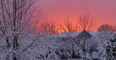 Storm...Back Yard 2-5-16_2300 (photoholic1) Tags: trees winter sunset storm backyard wintersunset february