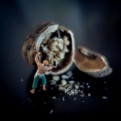 Nutcracker (Stephan Harmes) Tags: macro miniature bokeh walnut makro miniatur walnuss nussknacker
