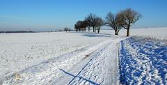 Winterlandschaft-Winter scenery (Karabelso) Tags: street schnee winter germany sony a33 sachsen zwickau landschaft bäume weis
