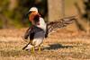 Mandarin Duck (Stephen J Pollard (Loud Music Lover of Nature)) Tags: mandarinduck aixgalericulata patomandarín bird ave nature naturaleza fauna wildlife