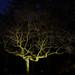 Winternachtbaum