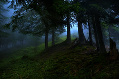 Hiraeth (Andrea Effulge) Tags: blue trees light mist green nature misty fog forest lost haze solitude magic dream foggy folklore haunted forgotten soul dreams melancholy breeze magical mythology myth dreamscape lore mythical sorcerer sorcery sweven magicalforest hiraeth phoenixfeatherxlight phoenixfeatherlight